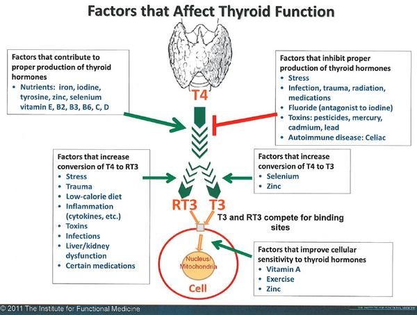 Thyroid Test Functional Medicine Functional Nutrition