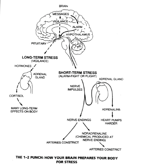 a short term induced stress and meditation response Short term meditation training improves attention and self-regulation article (pdf available) short-term meditation training improves attention and self-regulation activity.